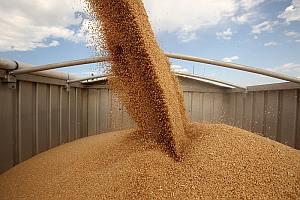 перевозка пшеницы